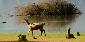 Cochin Kabini tour package
