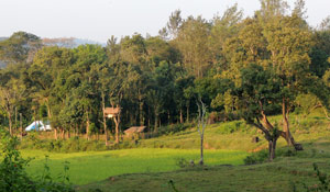 Accommodation in Wayanad